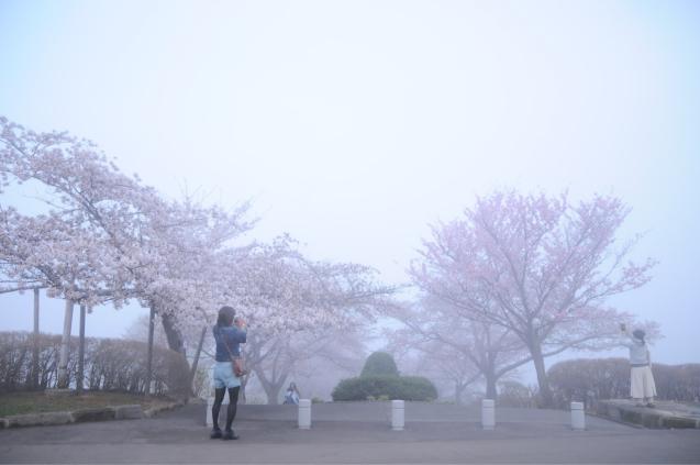 桜満開のGWでした!!_c0125899_16405929.jpg