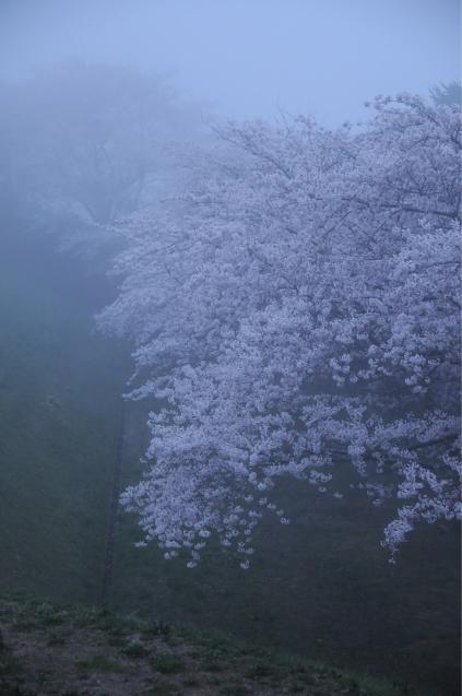 桜満開のGWでした!!_c0125899_16412735.jpg
