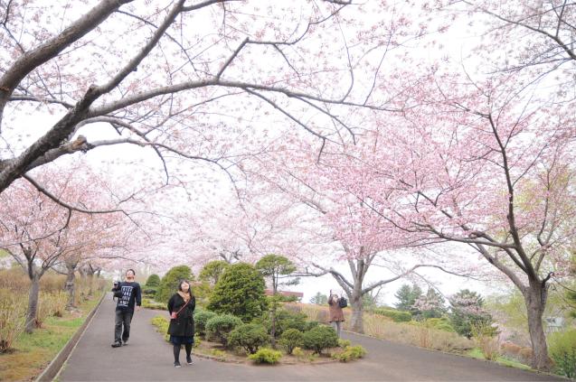 桜満開のGWでした!!_c0125899_16442889.jpg