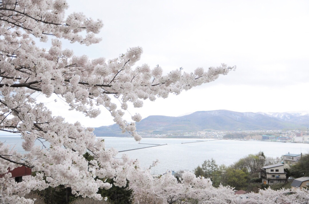 桜満開のGWでした!!_c0125899_16452793.jpg