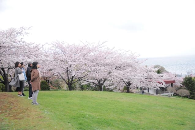 桜満開のGWでした!!_c0125899_16462372.jpg