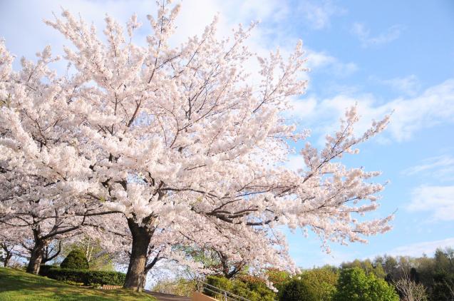 桜満開のGWでした!!_c0125899_16471009.jpg