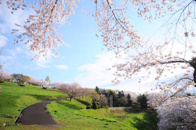 桜満開のGWでした!!_c0125899_16475835.jpg