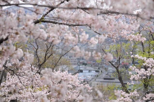 桜満開のGWでした!!_c0125899_16495813.jpg