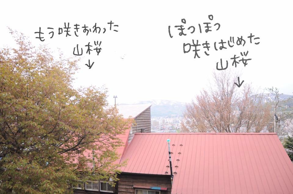 桜満開のGWでした!!_c0125899_16570962.jpg
