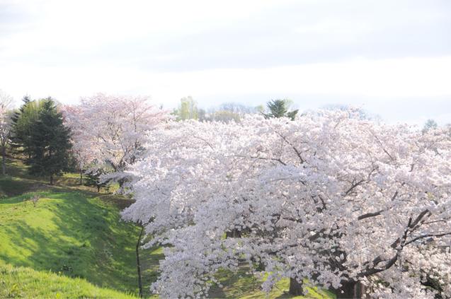 桜満開のGWでした!!_c0125899_17010401.jpg