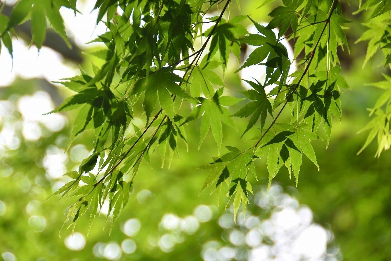 雨上がりの日比谷公園_d0065116_20014303.jpg