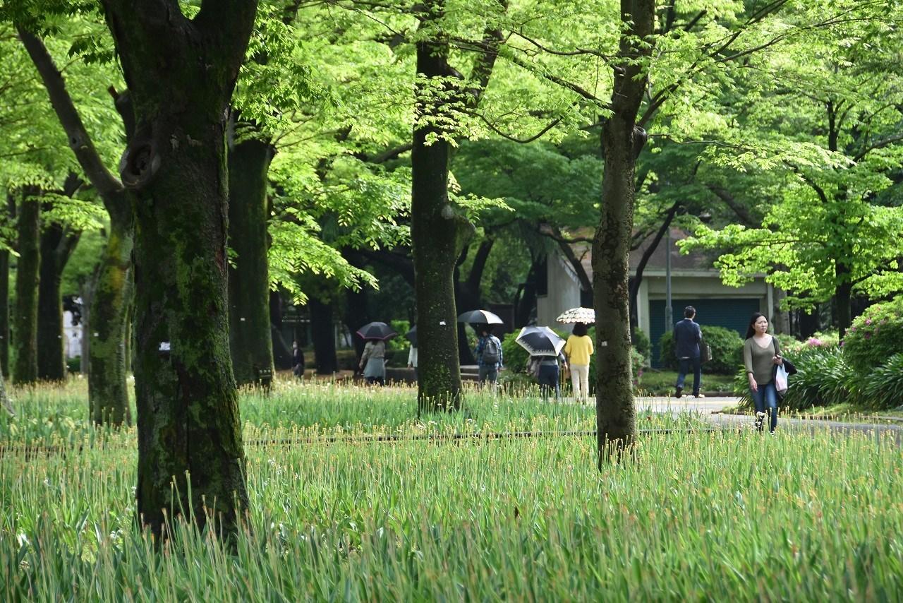 雨上がりの日比谷公園_d0065116_20024821.jpg