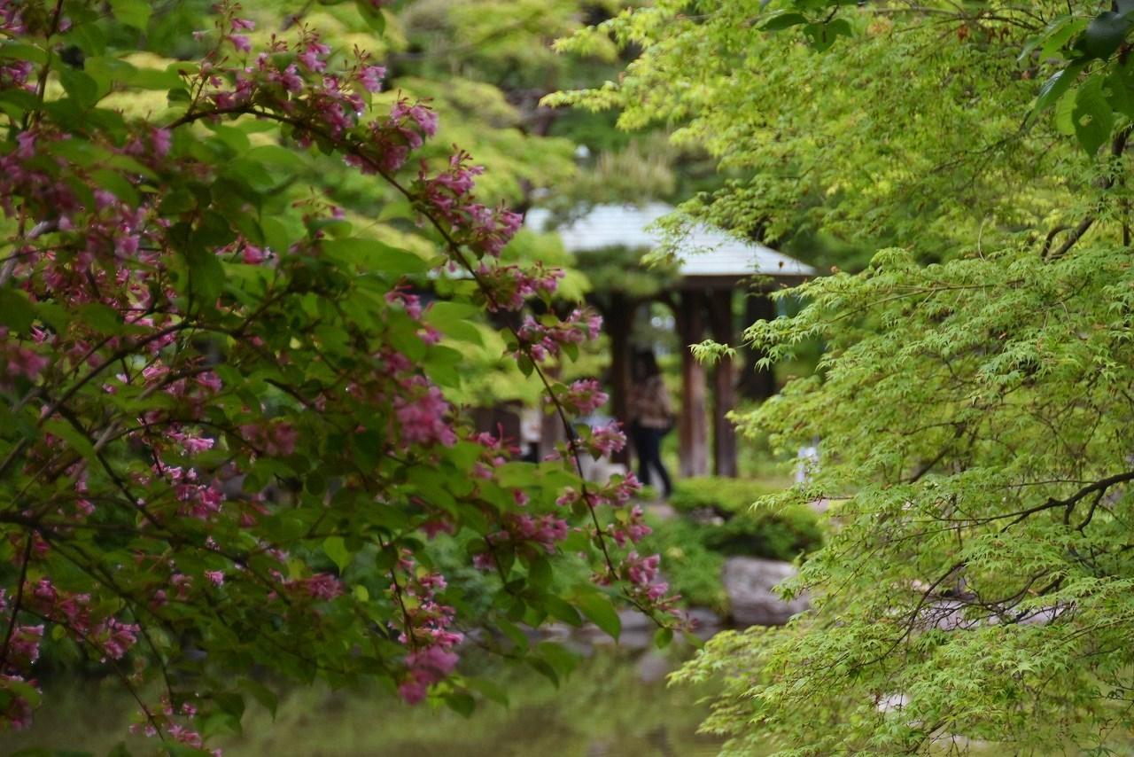 雨上がりの日比谷公園_d0065116_20045801.jpg