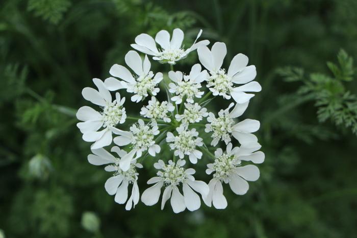 5月の庭で咲く 花_d0150720_10364902.jpg