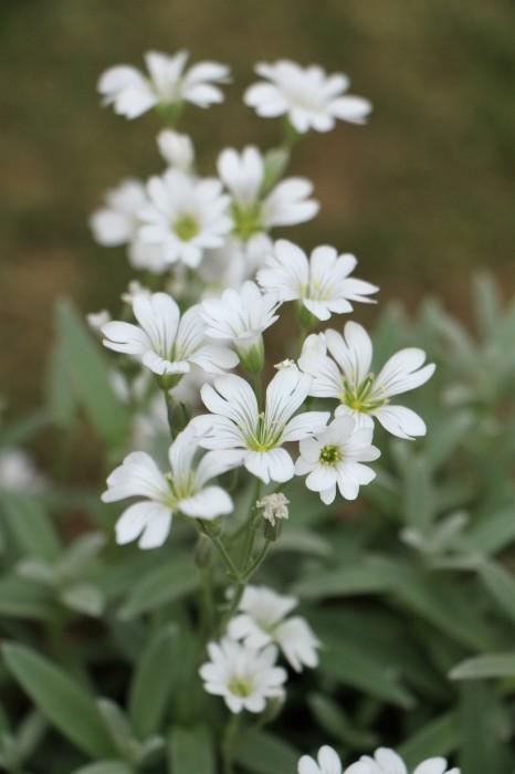 5月の庭で咲く 花_d0150720_10380533.jpg