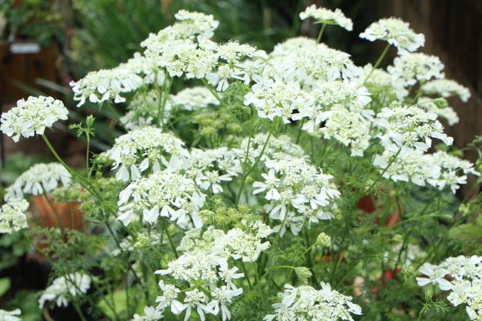 5月の庭で咲く 花_d0150720_10391127.jpg