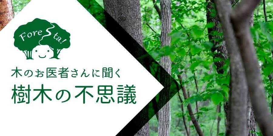 きたかるフォレスタ 〜ひかりの森の物語〜_b0174425_10365796.jpg