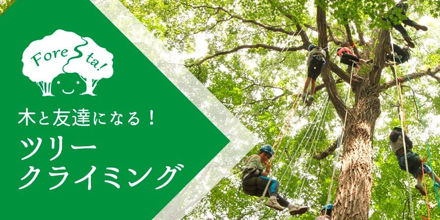 きたかるフォレスタ 〜ひかりの森の物語〜_b0174425_10375856.jpg