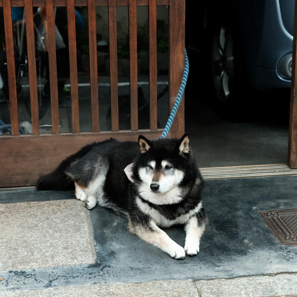 京都犬_f0050534_10314268.jpg