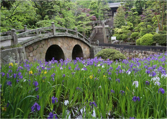 菅原神社の眼鏡橋とカキツバタ_a0256349_16153537.jpg