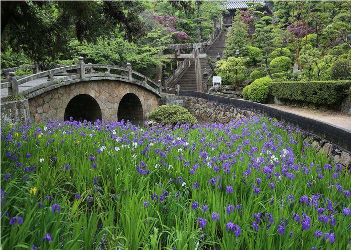 菅原神社の眼鏡橋とカキツバタ_a0256349_16154574.jpg