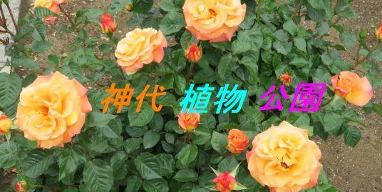 b0133750_15584206.jpg