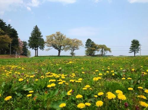 花咲ツアー、盛岡、一関編_e0071652_14263449.jpeg