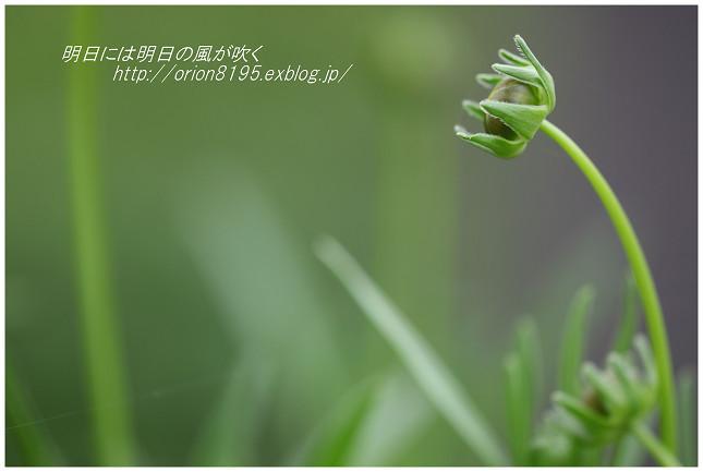 f0361079_19014681.jpg