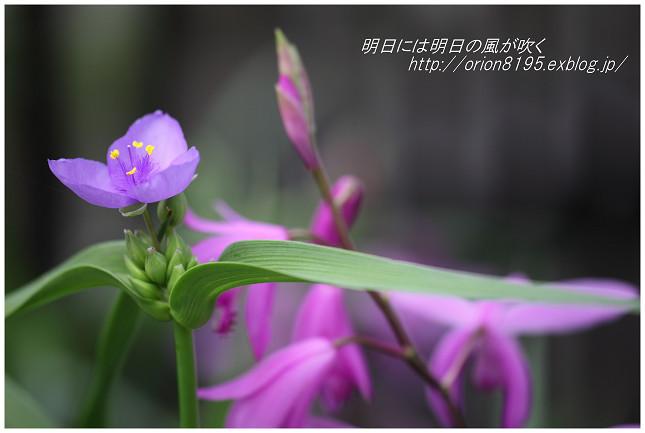 f0361079_19015164.jpg