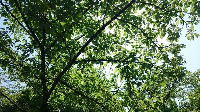 新緑の季節♪_f0147585_15455629.jpg