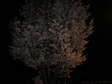 歩きましたよ。咲いてましたよ^-^!_d0198793_19070226.jpg
