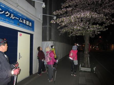 歩きましたよ。咲いてましたよ^-^!_d0198793_19145951.jpg