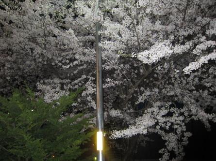歩きましたよ。咲いてましたよ^-^!_d0198793_19201763.jpg