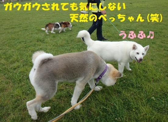f0121712_00383090.jpg