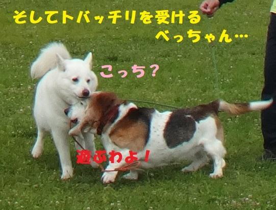 f0121712_01091412.jpg