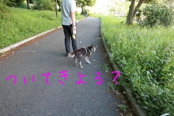 f0369014_19304029.jpg