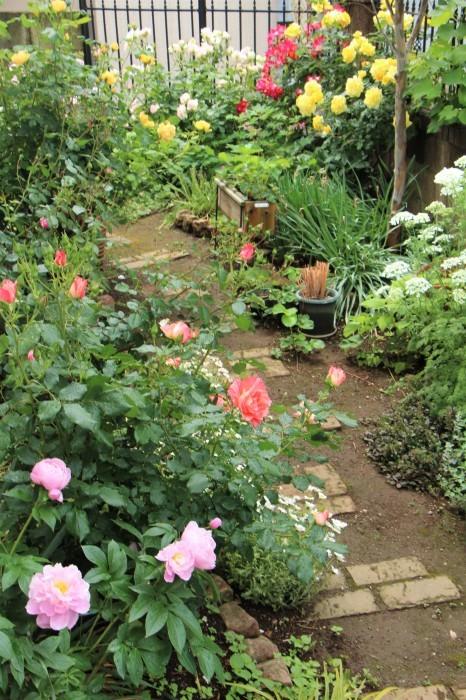 庭のバラ_d0150720_06531471.jpg