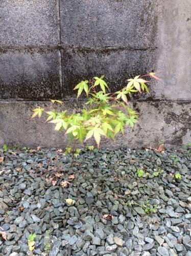 草取り_f0129627_08013945.jpg