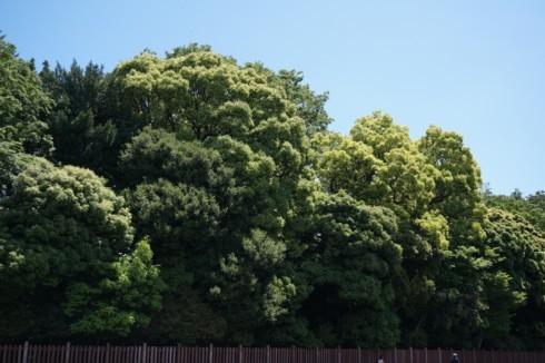 噴火する緑のエネルギー_f0055131_09570529.jpg