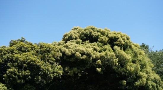噴火する緑のエネルギー_f0055131_09571467.jpg