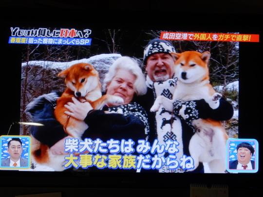 '18,5,8(火)柴犬ラブのノルウェー人夫婦!_f0060461_09134869.jpg