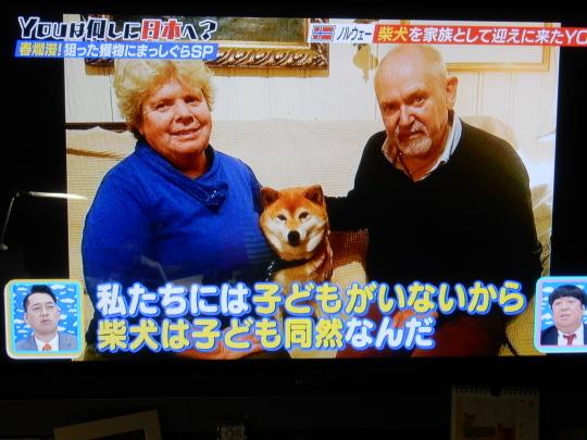 '18,5,8(火)柴犬ラブのノルウェー人夫婦!_f0060461_09200540.jpg
