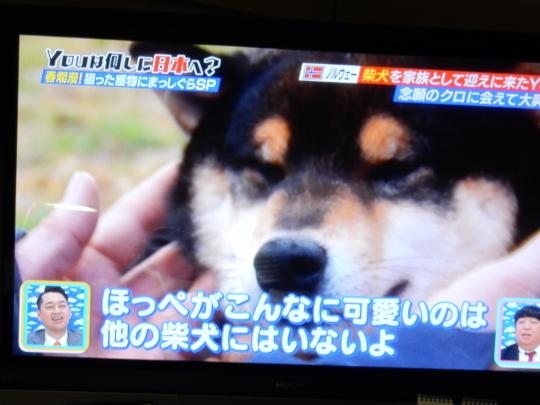 '18,5,8(火)柴犬ラブのノルウェー人夫婦!_f0060461_09221818.jpg