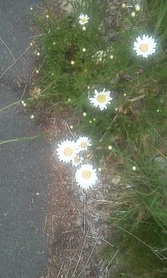 花より🍡団子_d0261282_19402833.jpg
