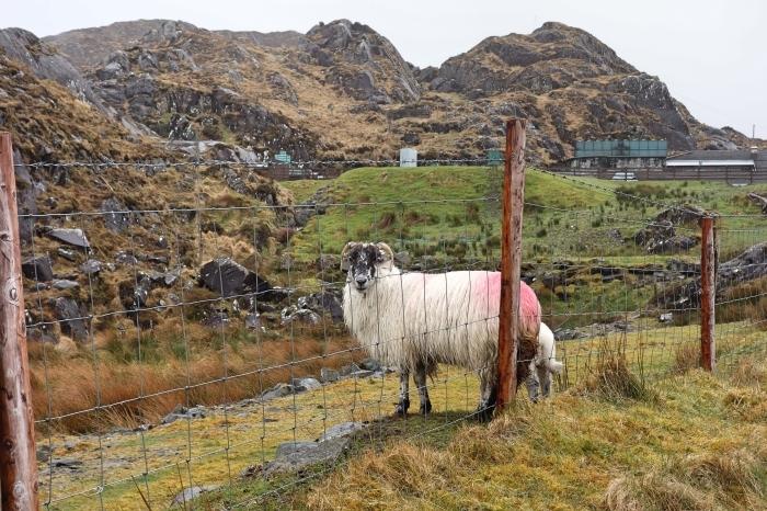 アイルランドの風_d0116009_09504086.jpg