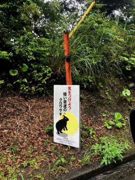 天然記念物「アマミノクロウサギ」さんと「イボイモリ」さん♪初見♪初撮り♪ ー番外編ー_e0218518_16534922.jpg