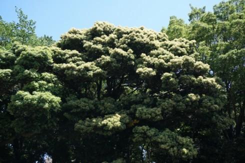 新緑はキノコ雲のように_f0055131_10004882.jpg