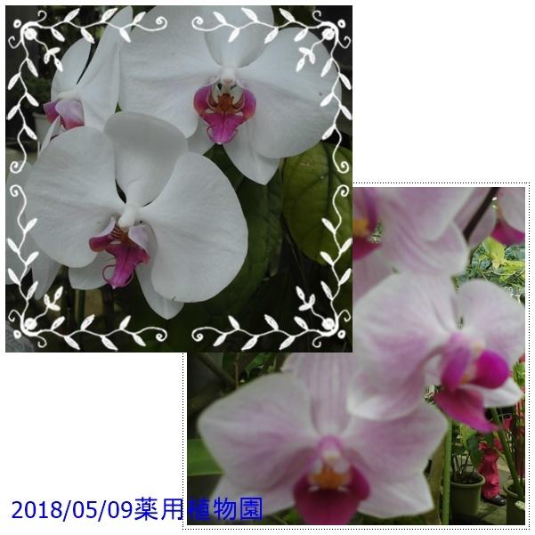 f0120433_23303649.jpg