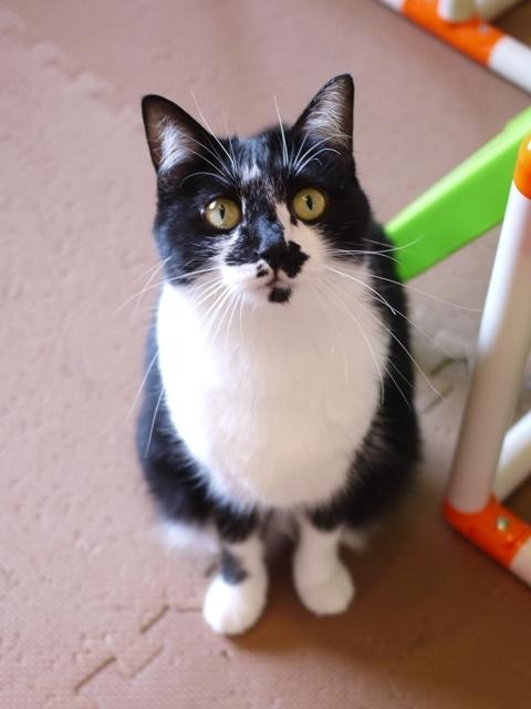 猫のお留守番 クルルちゃん編。_a0143140_22034266.jpg
