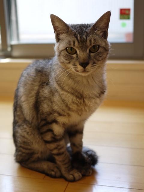 猫のお留守番 ぐりくん編。_a0143140_22322336.jpg