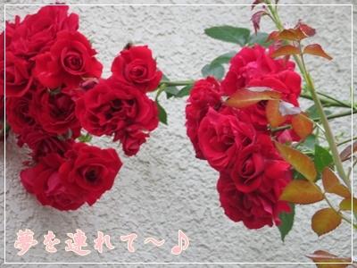 b0254145_10010997.jpg
