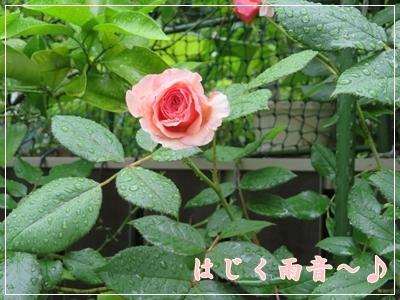 b0254145_10031096.jpg