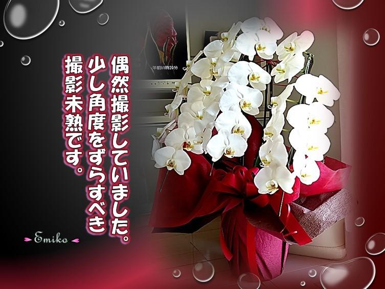 f0214467_00161521.jpg
