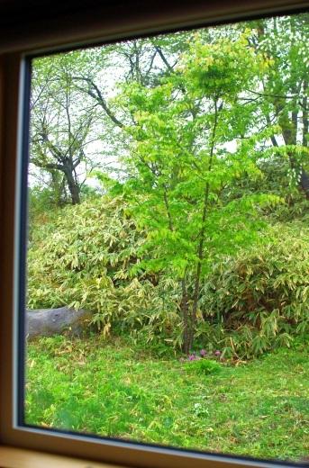 梅雨のような5月上旬_c0110869_08340768.jpg